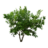 Plants Png Transparent Images image #44910