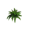 Plants Png Transparent Images image #44914