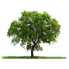 High Resolution Tree  Icon image #733