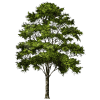 Clipart Tree Collection thumbnail 714