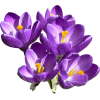 Purple Flower Collection Clipart image #6236