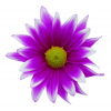 High Resolution Purple Flower  Icon image #6210
