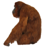 Red Orangutan Standing To The Side Image image #48071