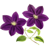 Res Purple Flowers  By Hanabell1 D6l7m35 image #6219