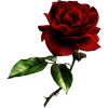 Vector Rose image #39867