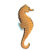Download Free Seahorse Images image #24556
