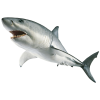 Download Free High-quality Shark  Transparent Images image #42738