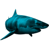 Shark  Transparent image #42730
