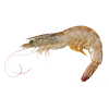 Background Transparent Shrimps image #34969