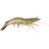 Download Free High-quality Shrimps  Transparent Images image #34971