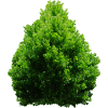 Shrub  Plan Tree image #42045