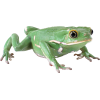 Simple Green Frog image #43149