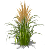 Simple Tall Grass image #44158