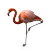 Single Foot Stance Flamingo Pictures image #47948