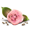 Single Rose Icon image #13899