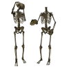 Icon Library Skeleton image #5326
