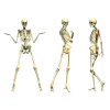 Skeleton  Transparent Images image #5325