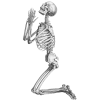 Skeleton, Skull And Transparent image #5340
