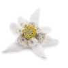 Soft-looking, Yellow-centered Edelweiss Photo image #48581