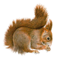 Best Free Squirrel  Image image #20470