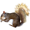 Free Download Squirrel  Images image #20482