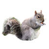 Free Download Squirrel  Images image #20485