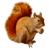 Download Free High-quality Squirrel  Transparent Images image #20492