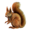 File  Squirrel image #20475