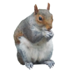 Collections Best  Image Squirrel image #20476