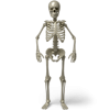 Standing Skeleton Icon image #5304