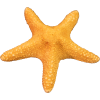 Free Download Starfish  Images image #19851