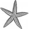 Download Starfish Icon Vectors Free image #19880