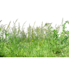 Tall Grass Background Image image #44162