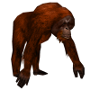 Transparent Background And Terrible Wild Orangutan image #48086