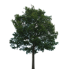 Hd Tree  Transparent Background thumbnail 718