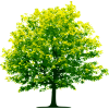 Clipart Tree Best image #756