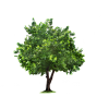 Tree  Background Transparent thumbnail 719