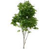 Pictures Tree Free Clipart image #708