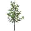Download And Use Tree  Clipart image #793