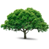 Tree Icon Download thumbnail 730