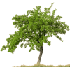 Download Free High-quality Tree Png Transparent Images image #735