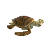 Download Icon Turtle image #22682