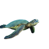 Turtle Vector Free  Download image #22673