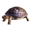 Best Collections  Image Turtle image #22677