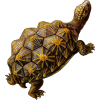 Turtle Download Free Images image #22680