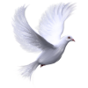 White Dove Background Design image #41733