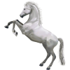 White Horse 3d Animal image #22319