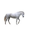 Free Download Of Horse Icon Clipart image #22541