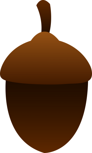 Download For Free Acorn Png In High Resolution PNG images