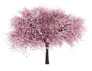 Almond Tree Png PNG images